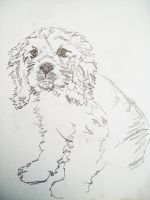 Cocker Pup Scribble by ryliecat
