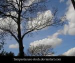 Tree 2-Stock by tempestazure-Stock