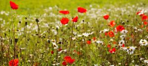 Field Of Wild by Hitomii