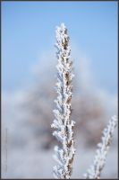 Beautiful rime by swiftach