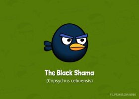 The Black Shama by Filipeanuts