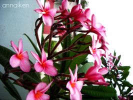 In the Pink by annaiken