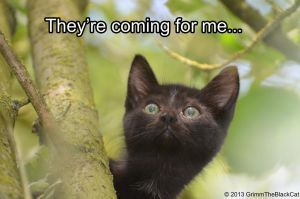 Grimm The Black Cat Meme - They're coming... by Tarsicius
