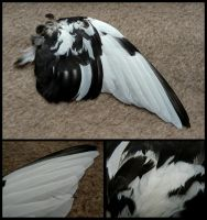 Black and White Feral Dove Wing by CabinetCuriosities
