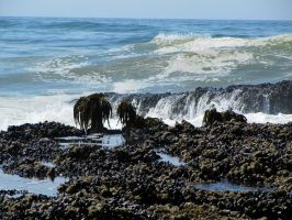 SeaWeed 3 -- Sept 2009 by pricecw-stock