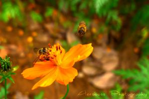 Get away from my flower! by kyle-aerobass