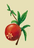 Pomegranate by ProfBell
