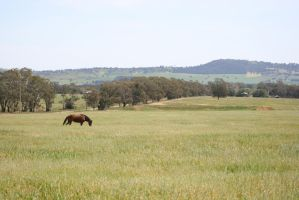 Background Stock 1A by Goanna-Equine