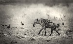 The Bone Collector by MorkelErasmus