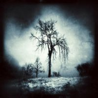 Elder by intao