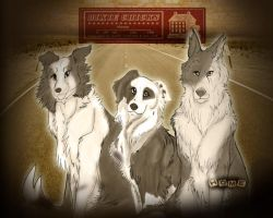 "The Dixie Pups Album ""Home"" by MaiaxDale"