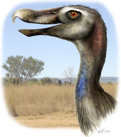 Mesembriornis by rfcunha