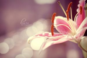 Lilly Bokeh by Lady-Tori