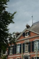 Storks on the roof by steppelandstock