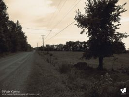 Dirt Road, Powerlines and Tree (2014) Felix Catora by StarMothPhotography