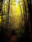 Misty Forest by Vethonwen