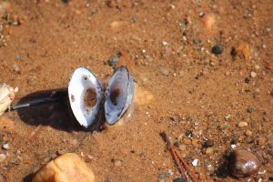 shell on sand by Irie-Stock