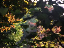 Tree Foliage by POETRYTHROUGHLENS