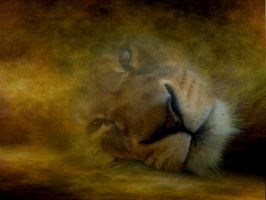 Lioness1.0 by AndreaHaesler