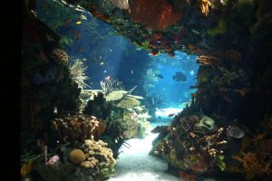 Aquarium Stock 28 by Malleni-Stock
