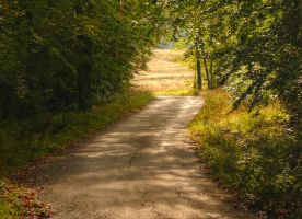 Follow the path by Zelma1