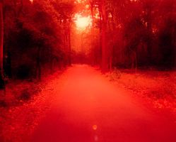 6-Autumn Path by agentrsdg