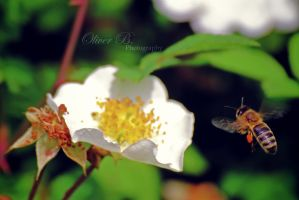 Pollination IV by OliverBPhotography