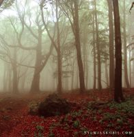 foggy by SylwiaS