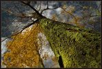 Just About The Fall by IgorLaptev