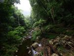 Minnamurra Rainforest 5 by Endrii