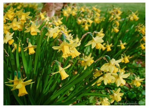 Spring Flowers by aniabeata