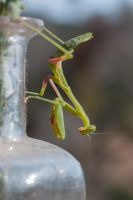 Mantis on the deck by kayaksailor