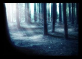 Forests by BlueMoonStock
