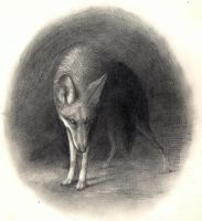 Circle Yote by nikkiburr