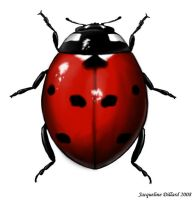 Coccinelidae by JacquelineRae