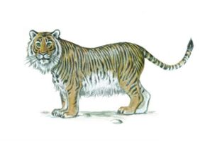 Caspian Tiger by ClausThomsen