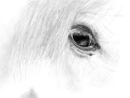 Horse's eye by Meodih