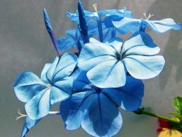 1810-BLUE PLUMBAGO by binder1