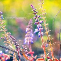 colorful plants by Slgado