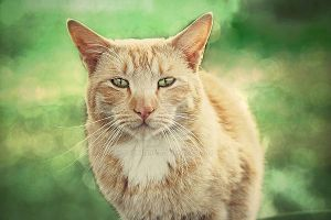Cat by Cathriine