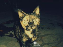 cat at night by miss-killer
