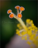 Hibiscus Stamen by theBlendedPath