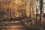 Too early autumn by Pajunen