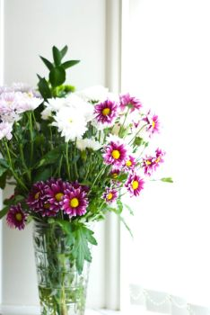 Cut flowers stock by Quinnphotostock