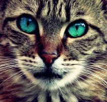 Green And Blue Eyed Cat by OnlyAngel55