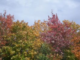 fall 2005 by erinqwerty
