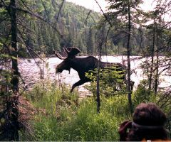Moose on the Sleeping Giant by RocksRose