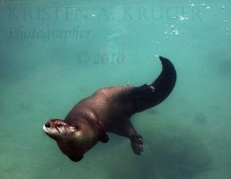 Otter Play by KAKruger
