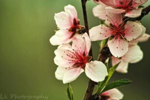 signo de primavera VI by Lk-Photography