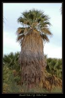 Bearded Palm I  7833 by Eolhin
